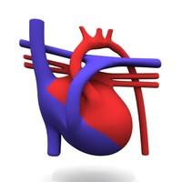3d heart scheme