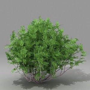 busch shrub 3d lwo