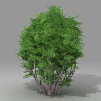 3ds busch shrub