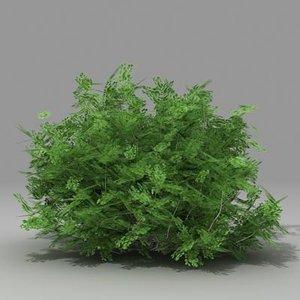 3dsmax busch shrub