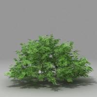 3d busch shrub model