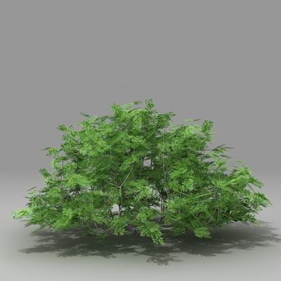 3d busch shrub model