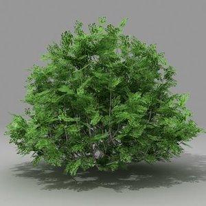 3d model busch shrub