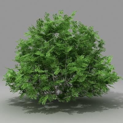 3d model busch shrub