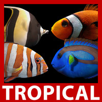 clownfish rigged 3d 3ds