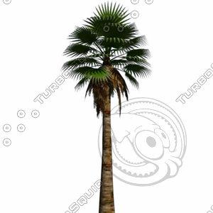 3ds max fan palm washingtonia filifera