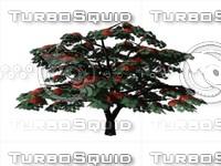 3ds max tree delonix regia zipped