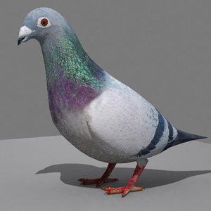 3d 3ds pigeon