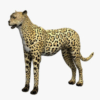 cheetah cat 3d max