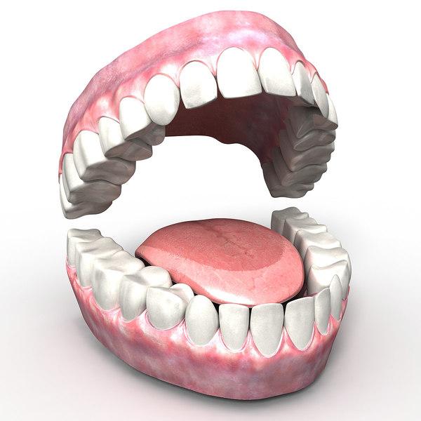 teeth tongue gums 3d obj