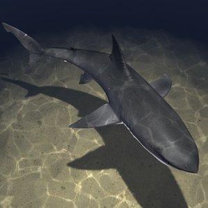 white shark obj