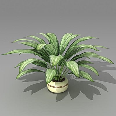 3d model aglonema
