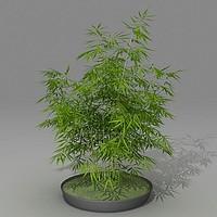 3d model bambo