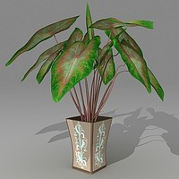 c4d calaidium houseplant