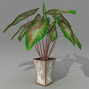 c4d calaidium houseplant