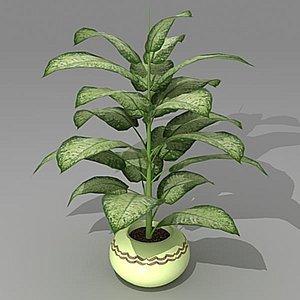 difenbahia houseplant 3d model