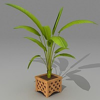 heliconia houseplant 3d max
