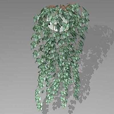 3d ivy model