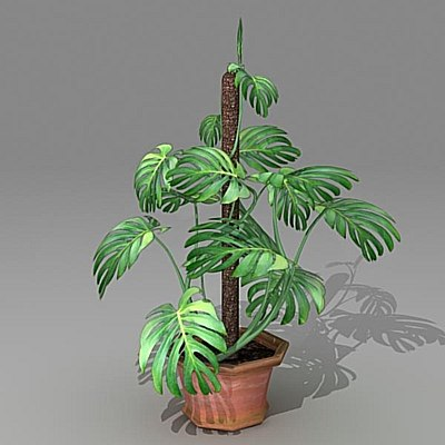 3d max monstera houseplant
