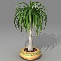 3d yucca model