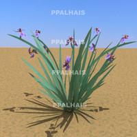 3d plant leaf neomarica caerulea model
