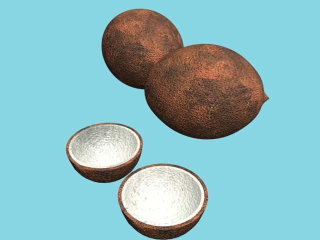 3d model of coconut