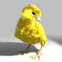 poult chicken 3d lwo