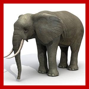 elephant polys 3d max