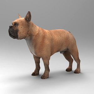 french bulldog 3d model