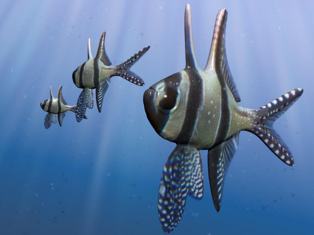 3dsmax cardinal benggai fish
