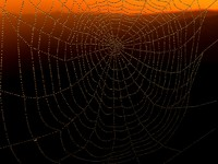 max dew spider web