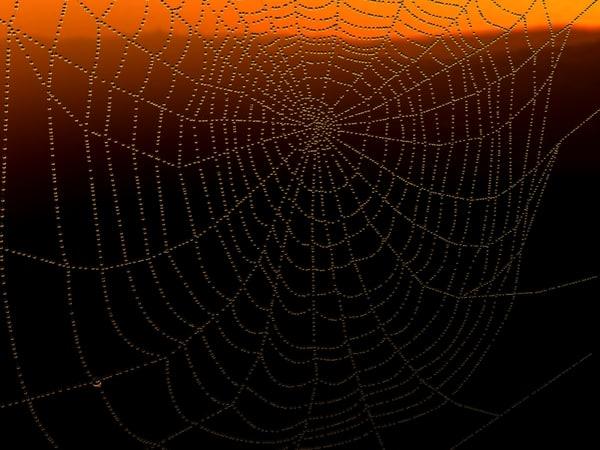 max dew spider web