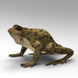 max frog
