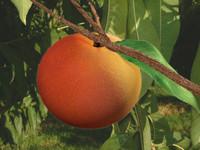 peach.rar