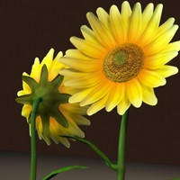 sunflower flower 3d model