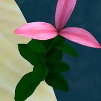 pretty flower 3d model