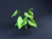 tree-Anthurium-01.zip