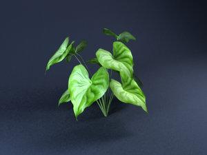 tree-Anthurium-01