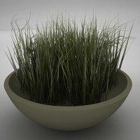 plant living