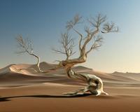 c4d desert tree