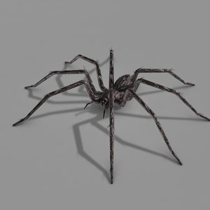 spider model
