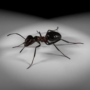 Ant 3ds Max