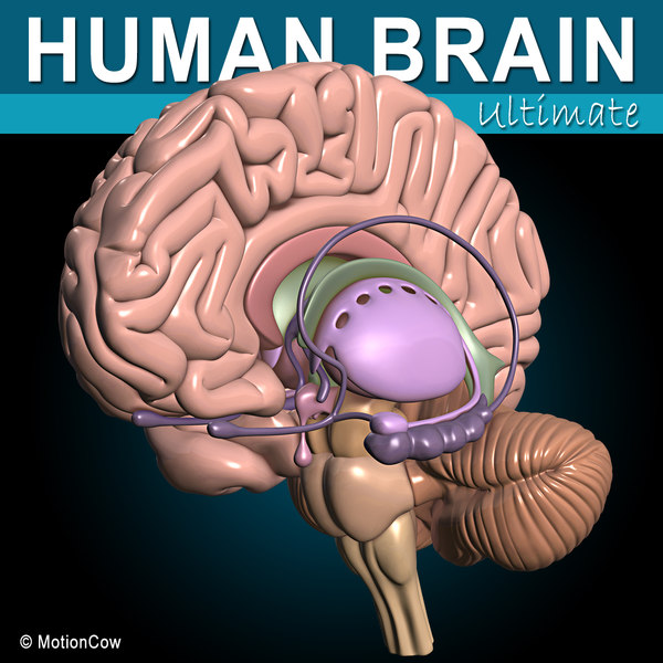 Human Brain Ultimate