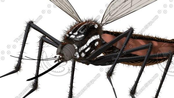 mosquito gnat midge