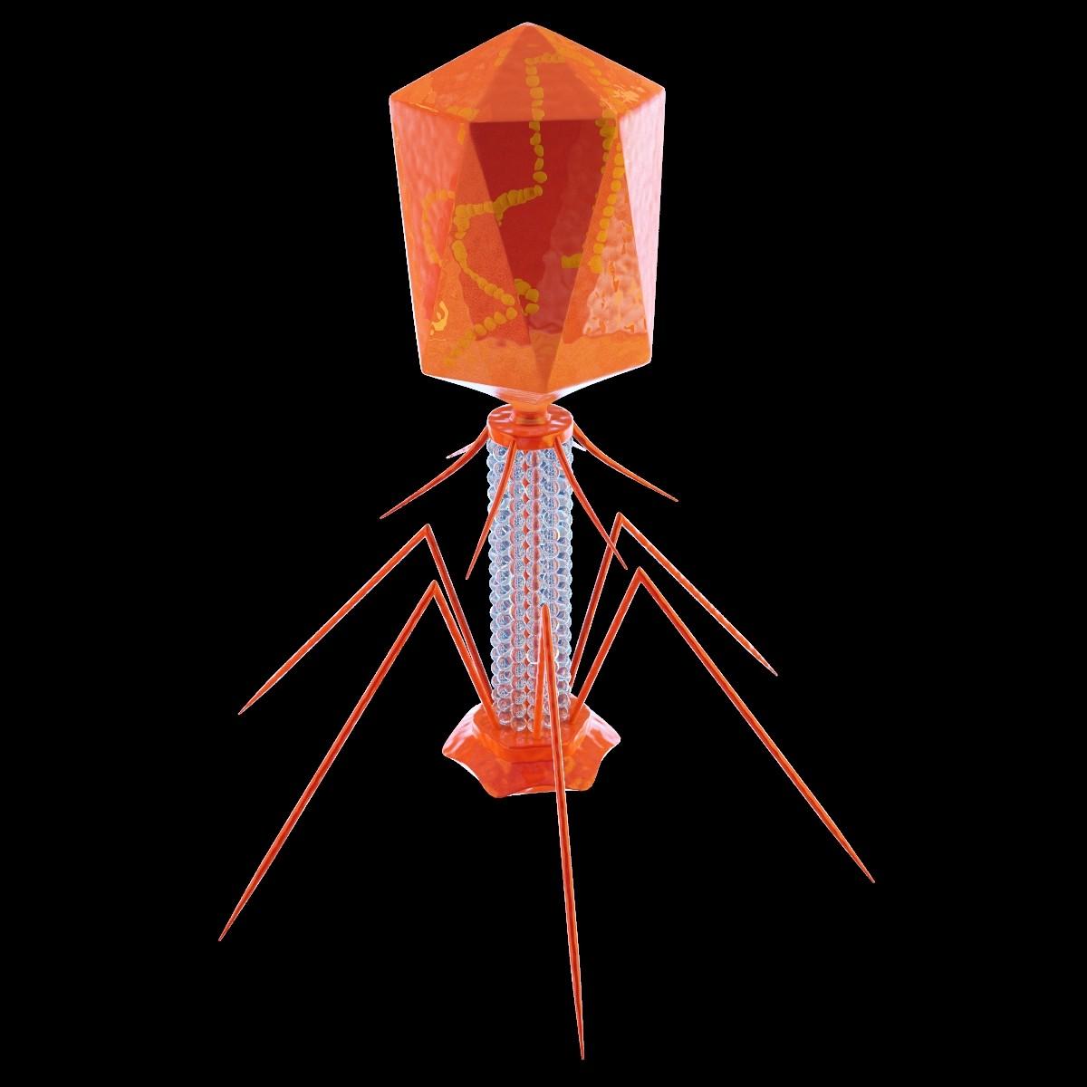 Bacteriophage virus 3D - TurboSquid 669830