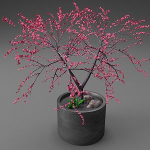 3d model cherry blossom tree planter