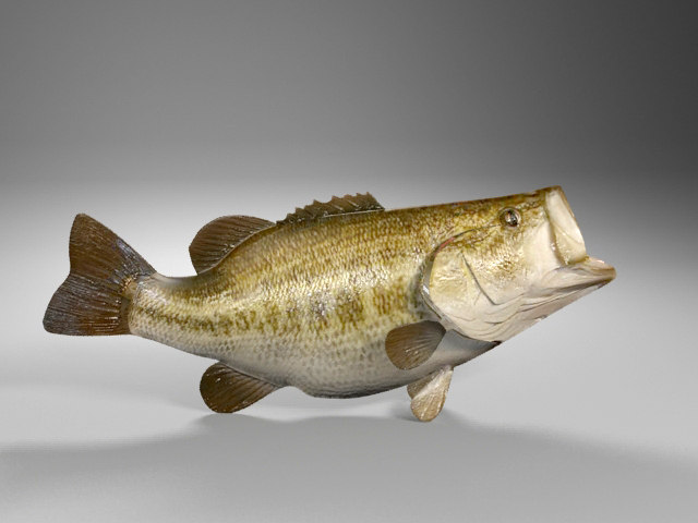 3d model largemouth bass
