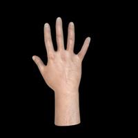 3d model right man hand