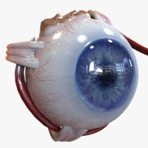 Eye Anatomy Blue
