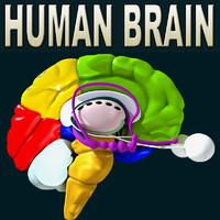 Brain All Formats